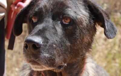 Baloo – Adopted